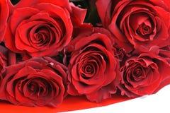Naturlig bakgrund för röda rosor Arkivfoto