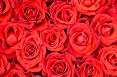 Naturlig bakgrund för röda rosor Bukett av röda rosor för dag för valentin` s Royaltyfri Fotografi