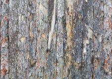 Naturlig bakgrund för textur för planka för trädskäll fotografering för bildbyråer