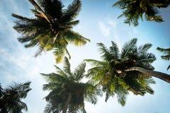 Naturlig bakgrund från den Boracay ön med kokosnöten gömma i handflatan trädblad, fotografering för bildbyråer