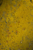 Naturlig bakgrund. gul moss royaltyfria foton