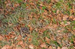 Naturlig bakgrund - höstsidor på gräs Arkivbilder