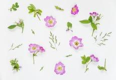 Naturlig bakgrund med rosa löst steg blommor Royaltyfria Bilder