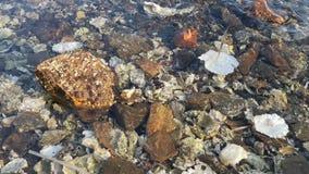 Naturlig bakgrund med stenar och skal lager videofilmer