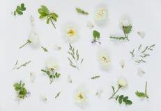 Naturlig bakgrund med vitt löst steg blommor royaltyfria bilder