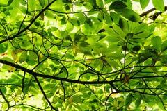 Naturlig bakgrund - nya gräsplansidor på trädet Royaltyfri Bild