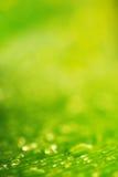 Naturlig bakgrund Vattendroppar över ny grön bladtextur Arkivfoto