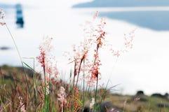 naturlig bakgrundsblomma Royaltyfria Bilder
