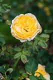 naturlig bakgrundsblomma Fantastisk natursikt av blommablom Royaltyfri Fotografi