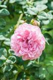 naturlig bakgrundsblomma Fantastisk natursikt av blommablom Royaltyfria Bilder
