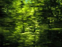 naturlig bakgrundsecogreen Royaltyfri Fotografi