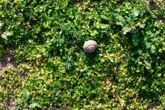 naturlig bakgrundsgräsgreen Top beskådar arkivfoton
