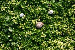 naturlig bakgrundsgräsgreen Top beskådar royaltyfria foton