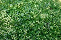 naturlig bakgrundsgräsgreen Top beskådar arkivbilder
