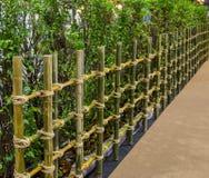 Naturlig bambufäktning Royaltyfria Foton