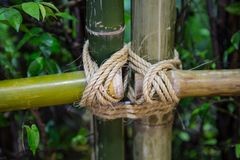 Naturlig bambustaketnajning Arkivbild