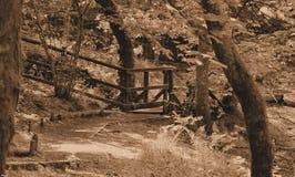 Naturlig banaväg för Sepia i skog Royaltyfri Bild