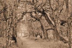 Naturlig banaväg för Sepia i skog Arkivfoto