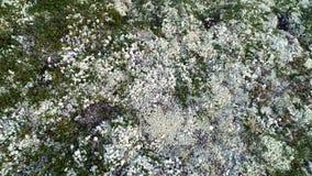 Naturlig bergvit Moss Covering Hills ovanför blå tonad hjälpmedelsikt arkivfilmer