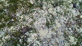 Naturlig bergvit Moss Covering Hills ovanför blå tonad hjälpmedelsikt stock video