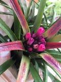Naturlig blomma Arkivbilder