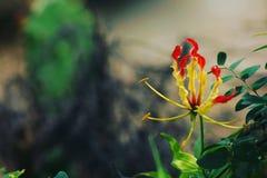 Naturlig blomma royaltyfria bilder
