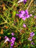 Naturlig blommabild Royaltyfria Foton