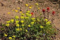 Naturlig blommaträdgård Royaltyfria Foton