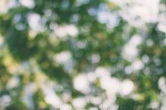 Naturlig bokehbakgrund, ny sund grön bio bakgrund med abstrakt suddig lövverk och ljust sommarsolljus Royaltyfria Foton