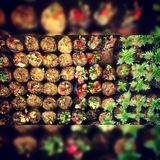 naturlig collage arkivfoton