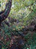 Naturlig djungel Royaltyfri Foto