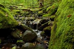 naturlig flod Royaltyfri Fotografi
