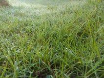 naturlig grässlätt för eftermiddagdagggräs sent Royaltyfria Foton