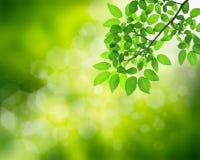 Naturlig grön bakgrund Royaltyfria Bilder