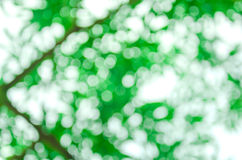 Naturlig grön bakgrund Arkivbilder