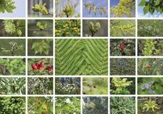 Naturlig grön collage av växter Royaltyfria Bilder