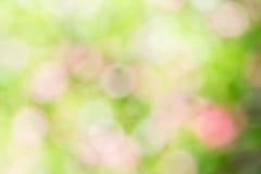 Naturlig grön ljus suddig bakgrund Royaltyfri Bild