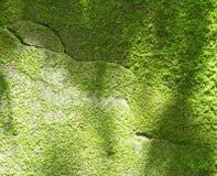 Naturlig grön mossa Royaltyfri Fotografi