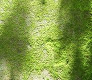 Naturlig grön mossa Arkivfoto