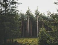 Naturlig grön skog Fotografering för Bildbyråer