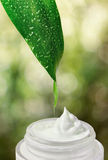 Naturlig grön suddig bakgrund. Royaltyfria Bilder