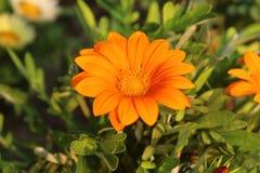 Naturlig härlig blomma Fotografering för Bildbyråer