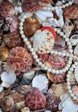 Naturlig härlig havsbakgrund från många skal av olikt s royaltyfria foton