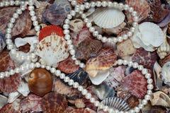 Naturlig havsbakgrund från många skal av olika former och arkivbild