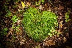 naturlig hjärta Fotografering för Bildbyråer