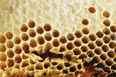 Naturlig honungskaka Fotografering för Bildbyråer