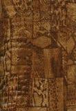 naturlig hudtextur Royaltyfri Bild