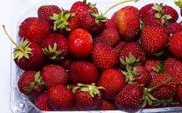 Naturlig jordgubbe i den plast- behållaren Royaltyfria Bilder