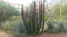 Naturlig kaktus och palmlilja av Arizona Royaltyfri Bild