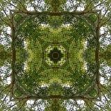 Naturlig kalejdoskop med bevekelsegrunder av träd Fotografering för Bildbyråer